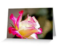 Beautiful yellow rose with pink splashes of colour Greeting Card
