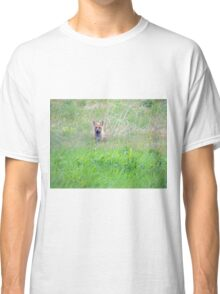 Red Fox in Spring Classic T-Shirt