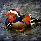 Vision on a mandarin duck.... by Smaragd