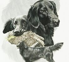 Flat-coated Retriever by BarbBarcikKeith