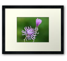 Mystery Wildflower Framed Print
