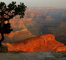 Grand Canyon Morning 3 by Stephen Vecchiotti