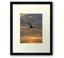 Flying Frigate Bird - Fregata Volando Framed Print