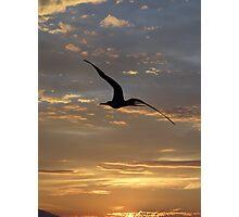 Flying Frigate Bird - Fregata Volando Photographic Print