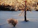 Sunrise On Icy Tree and Bush by Carolyn  Fletcher