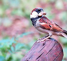 Sparrow  by Elizabeth Kendall
