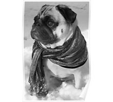Snow Pug Poster