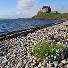 Lindisfarne Castle by Pete  Burton