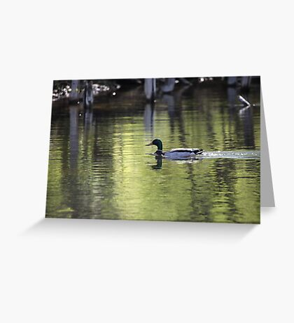 Duck Water Scene Greeting Card