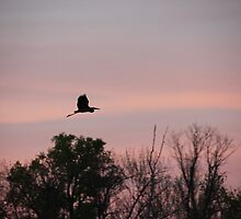 Great Blue Heron on Pink Sky by Thomas Murphy