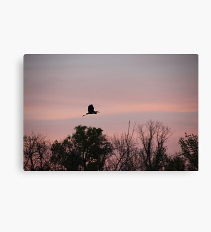 Great Blue Heron on Pink Sky Canvas Print