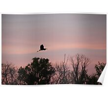 Great Blue Heron on Pink Sky Poster