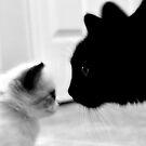 Memo & Wilson by SuddenJim