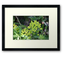 Flowers of Green Framed Print