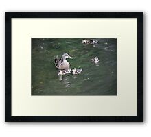 Duck with Ducklings Framed Print