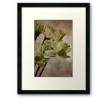 Daffodil (GRUNGE) Framed Print