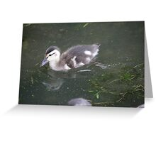 Ducklings on Lake Monona Greeting Card