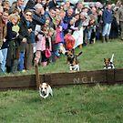 Terrier Racing by Pete  Burton