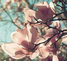 already blooming by Carina Potts