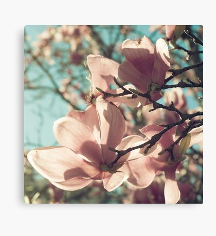 already blooming Canvas Print