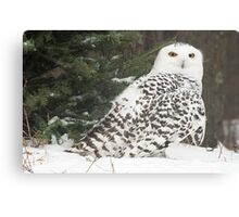 Snow Owl for Roy Canvas Print