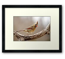 She is looking at me... Framed Print