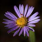Purple Vibrance by Pam Hogg