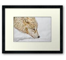 Nosing Around Framed Print