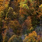 A colorful season by Patrick Morand