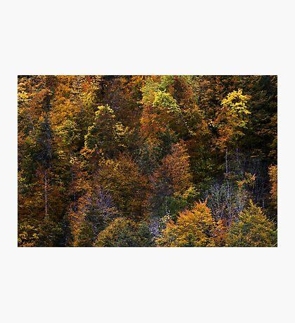 A colorful season Photographic Print