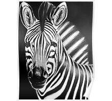 zebra painting Poster