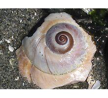 Pastel Shell Photographic Print