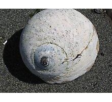 Moon Snail Shell Photographic Print