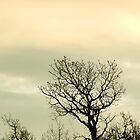 Lone Tree by Marijane  Moyer