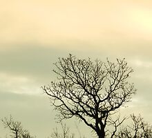 Lone Tree by Marijane  Moyer