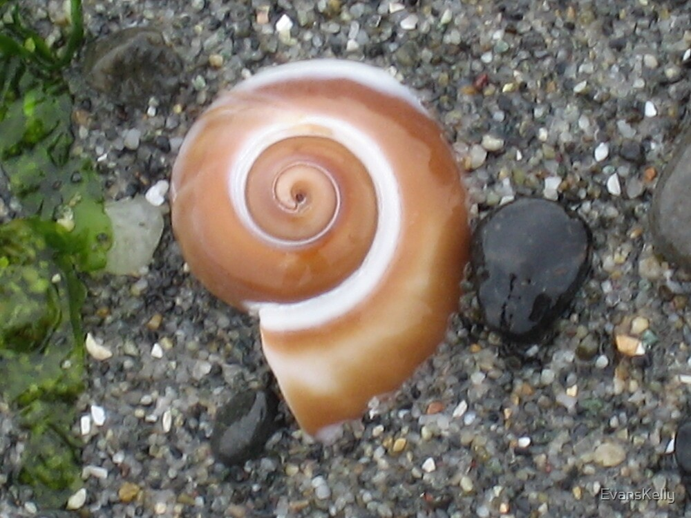 Snail Shell by EvansKelly
