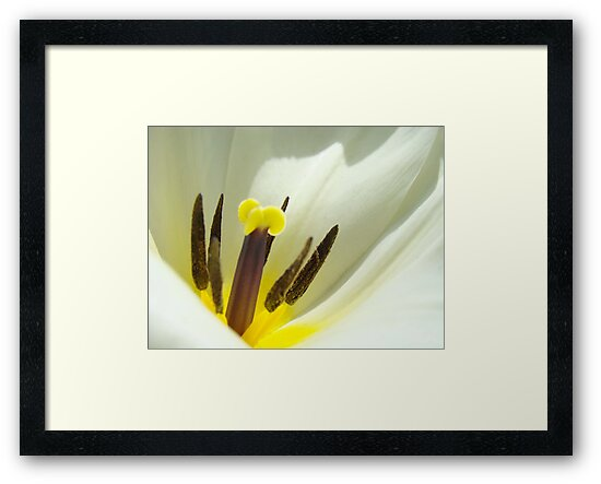 White Tulip Flower art print giclee Tulips Floral by BasleeArtPrints