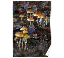 Oak leaf to fungi Poster