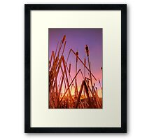 Stalking Sunset Framed Print