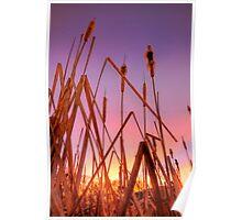 Stalking Sunset Poster