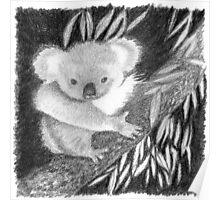 Koala at Night Pencil Sketch Poster