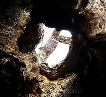 In a Hollow by Darcy Overland