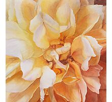 Heart of a Rose 2 Photographic Print