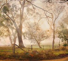 Mist in the Bush - Monkhouse Road, Nairne, The Adelaide Hills, SA by Mark Richards