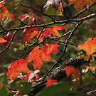 Autumn Brillance by Lisa G. Putman
