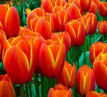 Tulip i-phone by Michael Eyssens
