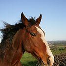 Horse Phone by Michael Eyssens