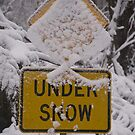 Under Snow Cover by Michael Eyssens