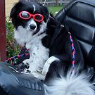 Max in his Goggles Waiting to Go by AnnDixon