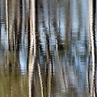 Silvery reflections by Elizabeth McPhee